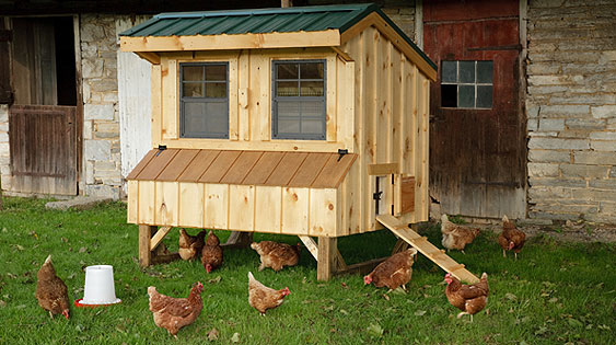 Quality Chicken Coops - EBERLY BARNS
