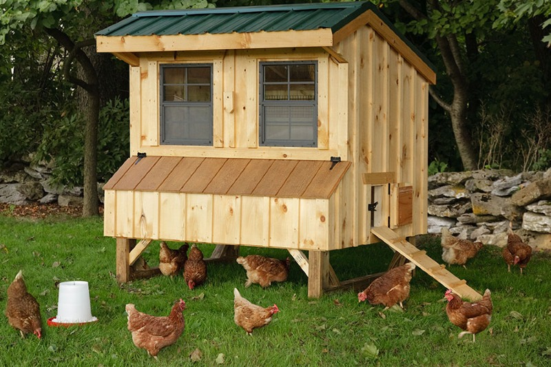 Quaker Chicken Coops Eberly Barnseberly Barns